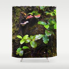 Vancouver Island's Forest Shower Curtain
