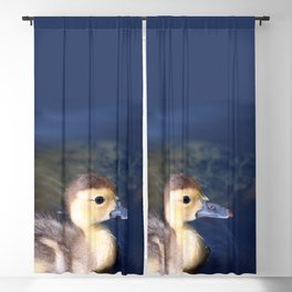 Cute Duckling Swimming in a Pond Blackout Curtain