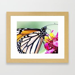 Fly About the World Framed Art Print