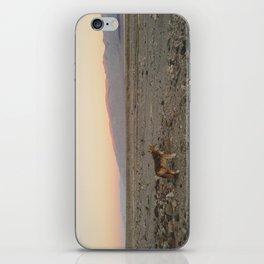 Desert Coyote iPhone Skin