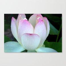 Pink Lotus Rain Drops Canvas Print