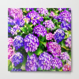 Elegant Purple & Lavender Hydrangea Metal Print