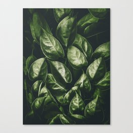 Leaves Paradise Canvas Print