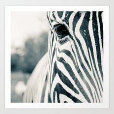 Zebra Face Black & White Art Print