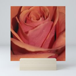 Cayenne Rose Mini Art Print