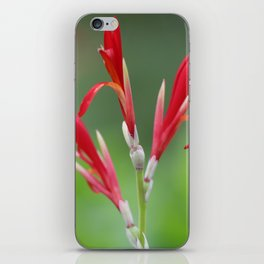 Canna Lily #2 iPhone Skin