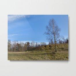 Birch on a hill Metal Print