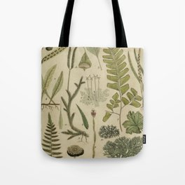 Ferns And Mosses Tote Bag