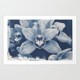 Iris in Blue Art Print