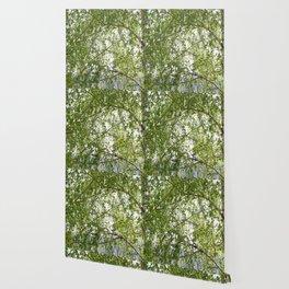 wood birch Wallpaper