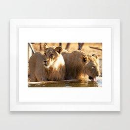 Asiatic Lion 12, Gir Forest, Gujrat, India Framed Art Print
