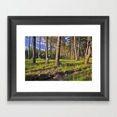 Dreaming Summer Forest Framed Art Print