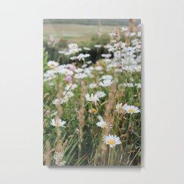 Daisies and Wildflowers  Metal Print