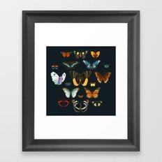 Entomology Vintage Butterfly Framed Art Print