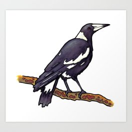 Australian Magpie Art Print