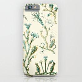 Ernst Haeckel - Scientific Illustration - Campanariae iPhone Case