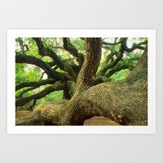Angel Oak 3 Art Print