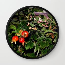 Rose Hips by the Sea, at Sunset (Wild Fresh, Bright and Ripe) Wall Clock