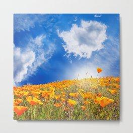 Orange poppies in Spring sunshine Metal Print