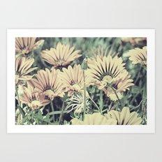 Desert Daisies - Daisy Project in memory of Mackenzie Art Print