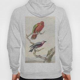 Tropical Bird Illustration - 18th Century Hoody