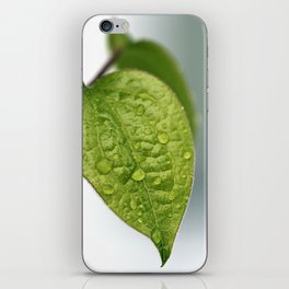 Raindrop Leaves iPhone Skin