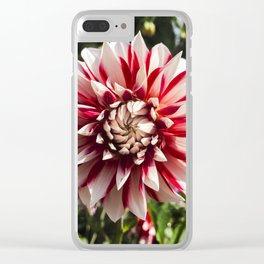 Dahlia In The Garden / 29 Clear iPhone Case