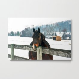 Thoughtful Horse Metal Print