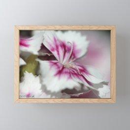 Sweet William from the Super Duplex Bluepoint Mix Framed Mini Art Print