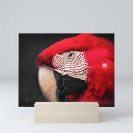 scarlet macaw - ara macao Mini Art Print
