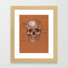Jesse Young's Human Anatomy Drawing of the SKULL (Circa 2005) Framed Art Print