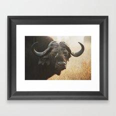 Grandpa Cape Buffalo  Framed Art Print