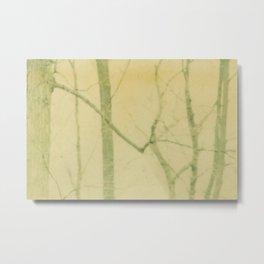 yellow winter trees Metal Print