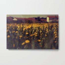 a sea of daisies Metal Print