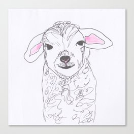 Cheeky lamb Canvas Print
