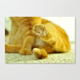 Orange Paw Canvas Print
