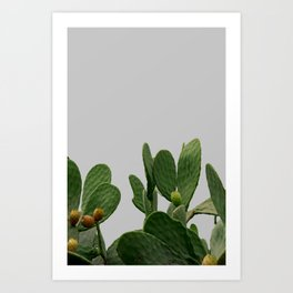 Cactus with the pastel white background Art Print
