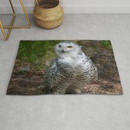 Alaskan Snowy Owl - Summer Rug