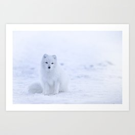 Arctic Fox 2 Art Print