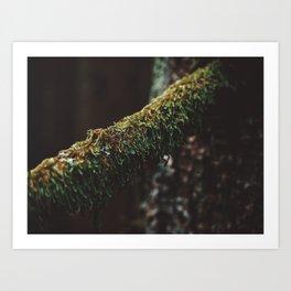Moody Moss Art Print