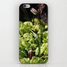 Chocolate Lilies iPhone & iPod Skin