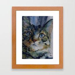 Mystery Tabby Framed Art Print