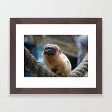 Monkey on Rope Framed Art Print