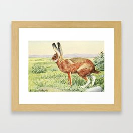 (1874-1927) - Burgess Animal Book for Children 1920 (Jack Rabbit) Framed Art Print