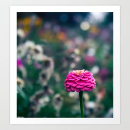 One flower to please them all Art Print