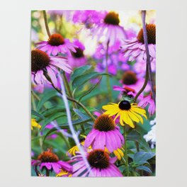 Yellow Flowers in the Purple Coneflower Garden Poster