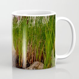 Driftwood And Cattails Coffee Mug