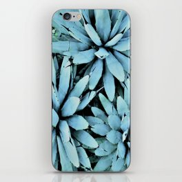 succulents in turquoise iPhone Skin