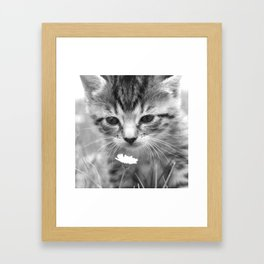 Cat Picture in Black and White Framed Art Print
