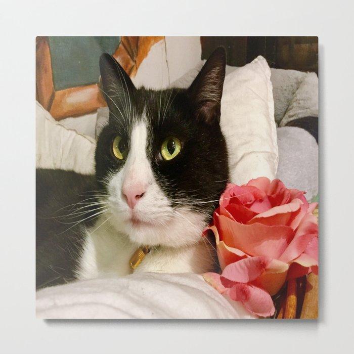 Orazio latin lover cat Metal Print